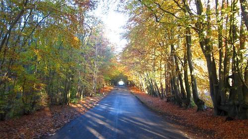 Autumn in Cumbria