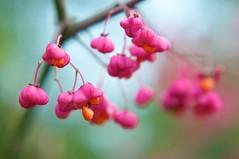 Cardinals Hat (martijnvdnat) Tags: park winter plant tree fall mos mushrooms herfst fungi cardinalshat paddestoelen