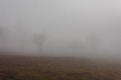 IMG_7379.jpg (sebmayor) Tags: tree nature fog schweiz switzerland suisse ethereal mysterious wallis brouillard valais ayent