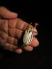 Polyphylla decemlineata, Ten-lined June Beetle (Birdernaturalist) Tags: arizona beetle coleoptera scarabaeidae melolonthinae pinalmountains gilacounty melolonthini