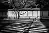 Yasukuni Shrine (Richard Buttrey) Tags: leica winter bw monochrome japan 35mm tokyo shrine summicron epson grayscale greyscale yasukuni hatsumode rd1 chiyoda rd1s
