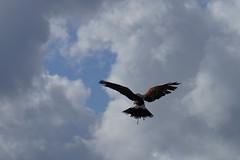 Fly (Mamanon) Tags: zoetermeer stadsboerderij weidemolen