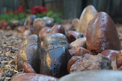 rocky road (ThrghMyEyes) Tags: arizona river rocks afternoon sony flowerbed dslr mesa riverrocks creeks myfrontyard streamsofwater