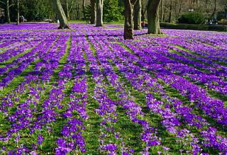 Frühling in