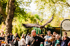 Bird Flight Demonstration (superhoopsa) Tags: bird london zoo flying flight birdofprey zsl