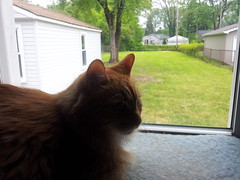 bailey loves the window to our backyard