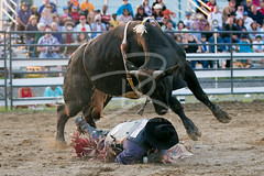 Rodeo (david.reid.5) Tags: canon photography cowboy stockphoto drphotos rawhiderodeo drphotosca bramptonsummer2013