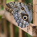 Stratford Butterfly Farm_4