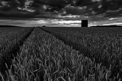 The 'Go to' Field... [Explored] (Phil 'the link' Whittaker (gizto29)) Tags: sunset monochrome mono blackwhite wheat northumberland oldmill 5dmk3 koodnd4 niksoftsilverefexpro2 lee09segrad 1740usmf4l