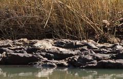 In de verte een enorme krokodil. (Roelie Wilms) Tags: namibia epupa crocodil krokodil namibi kunenerivier elementsorganizer