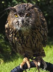 Wise (Jersey JJ) Tags: park lake who grand jackson lodge national owl wise teton the