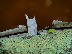 Mohawk Trail, Royalston, Massachusetts (lotos_leo) Tags: summer favorite abstract nature stone forest ma dam massachusetts zen swamp reality marsh terra bog richtung royalston mohawktrail otterriver bootlake