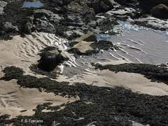 Rocas y algas en la playa de Sta. Cristina. Rocks and seaweed in Sta. Cristina beach. (Esetoscano) Tags: espaa costa seaweed beach contrast coast spain sand rocks playa arena galicia galiza contraste rocas algas santacristina acorua