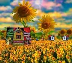 Sunflower People