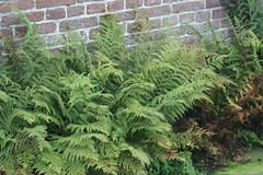 IMG_4917 (bulbinello) Tags: grass garden landscape natural jardin tuin garten planting taxus baccata gramines hummelo oudolf gardendesigner paysagisme newperennial