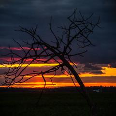 Crooked Tree at Sunset (Jos Pockett) Tags: autumn trees sunset ontario canada fall rural evening nikon colours sundown horizon country d7000