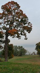 P1080779 (A Million Shards of Light) Tags: autumn dogs halloween fog river foliage hudson rockefeller rockwood