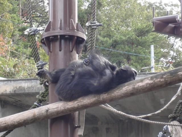 遊び疲れてしばし休憩。|名古屋市東山動植物園
