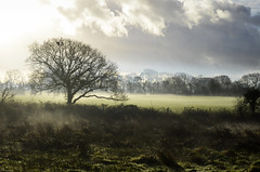 Morning at Agrumi (Hayley.Muir) Tags: morning light sky mist tree fog clouds newforest