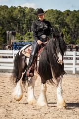 Meetup_Horses_1-19-14-4893.jpg (RobBixbyPhotography) Tags: meetupjacksonvillehorsesequestrian
