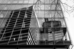 Guy's Reflected (cybertect) Tags: reflection london glass se1 stthomasstreet guyshospital canonfd50mmf14 londonse1 shardofglass theshard londonbridgetower sonya7
