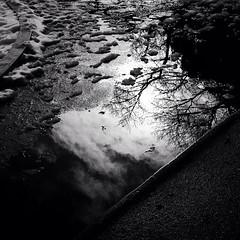 Winter Sun (s_inagaki) Tags: street blackandwhite cloud sun snow reflection tree water tokyo