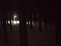 lightspan forest flares 01 (hc gilje) Tags: light motion lines forest woods flash