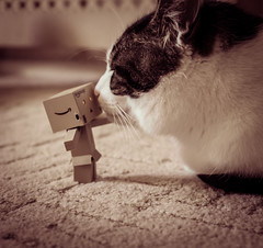 Love (Stephen Champness) Tags: love animal japan cat fun toy amazon kiss fuji danbo fujix100