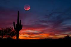 Fantasy (Steven Maguire Photography) Tags: sunset arizona clouds skyscape landscape desert tucson saguaro pimacounty