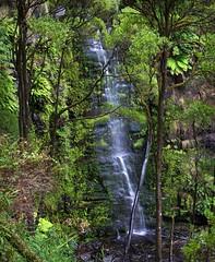 Erskine Falls (1) (My Shutter Shots) Tags: nature water landscape waterfall rainforest lorne erskinefalls