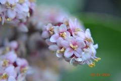 DSC_0250 (kazadmanesh) Tags: و بهار خشکسالی