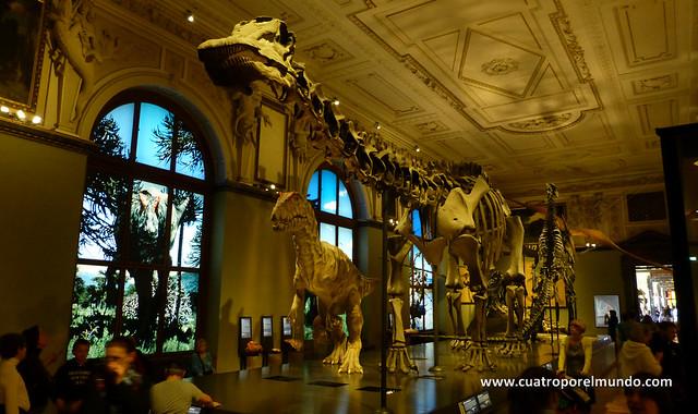Una de las salas dedicadas a los dinosaurios