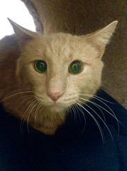 Lopez - 5 year old neutered male