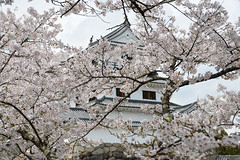 Shiroishi Castle (白石城) (AnotherSaru - Limited mode) Tags: shiroishicastle 白石城 shiroishijo japanese nippon kevinfrates shiroishi 白石市 shiroishishi 白石 miyagiprefecture 宮城県 miyagiken tōhokuregion 東北地方 tohokuchiho castle 日本 spring sakura blossom cherryblossom
