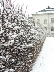 Snow is every where (María Arencibia) Tags: oslo norway fjord scandinavia winter snow cold trees tree sky clouds landscape park house city nature plants street