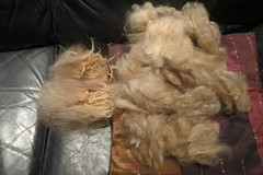 Tog and thel Rya sheep wool (despinkamer) Tags: rya sheep wool tog thel double coated fleece prepairing hand spinning