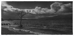Loch Lomond in March (johnny_9956) Tags: scotland canon water lake blackandwhite monochrome lochlomond loch