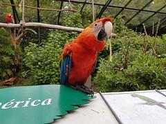 Papagayo (ElGusX) Tags: papagayo temaiken aves argentina buenosaires