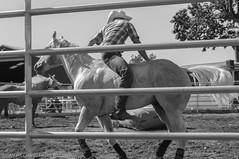 State Fair - Puyallup, WA (Tuzen) Tags: cowboy horse blackandwhite monochrome jockey adult fence competition farm sitting horizontal photography backwards rider