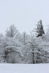 Snow Covered Trees (pegase1972) Tags: quebec tree winter québec canada qc arbre hiver snow neige monteregie montérégie licensed dreamstime fotolia rf123