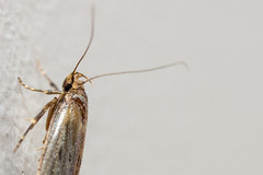 Photo of 21 - May - 2013:  Moth