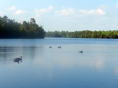 East Creek Pond (Christine_Ray) Tags: new pine forest state reserve national jersey pinelands barrens belleplain belleplaincapemayandparvin capemayandparvin