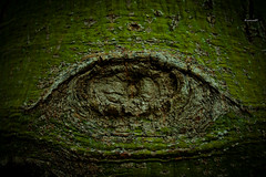 Nature's look (@_seaman85_@) Tags: park tree eye nature turia