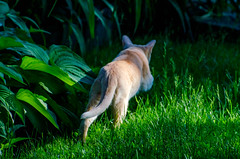 On the Prowl-13 (c.stewy) Tags: