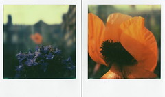 poppy (elin*) Tags: colour slr polaroid sx70 diptych poppy protection calendula px70 impossibleprojectfilm