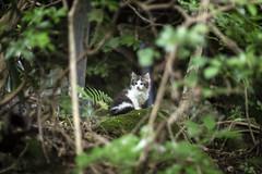 苔猫 (mijabi) Tags: cat moss kitty wildcat 猫 ねこ ぬこ 苔 野生 子猫 仔猫