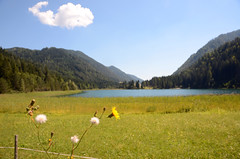 the lake (Wolfgang Binder) Tags: sky cloud lake mountains alps flower nature landscape austria nikon scenery d7000