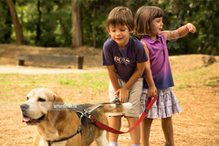 Walking the Dog (arturii!) Tags: park family boy summer dog hot beagle nature girl animal animals tongue walking warm child brothers walk young natura bulldog paseo domestic pack verano tricolor leash passeig calor corretja passejar ehat bigui