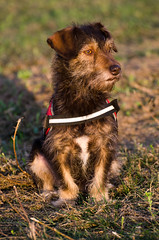 KIRA (Organspaender) Tags: dog nikon hund sp di af 70300mm tamron vc haustier usd 456 d5100
