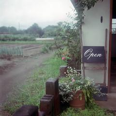 kitamoto10nc-film66 (yaplan) Tags: flower green film nature japan ikoflex memory  66